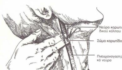 carotid-sinus-relfex