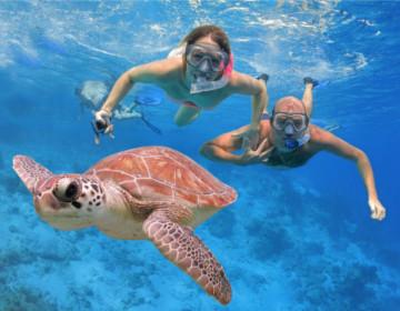 snorkel-turtle