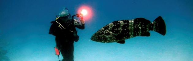 PADI Digital Photographer