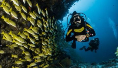 Life Lessons from SCUBA Diving